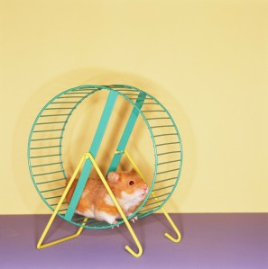 Fast Fashion is Like the Eternal Hamster Wheel. Can you really keep up?