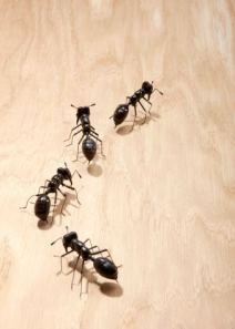 ants_as_starter_pets